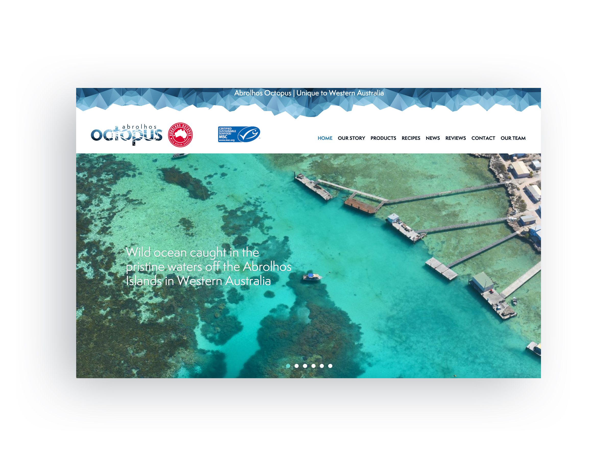 Abrolhos Octopus - Home