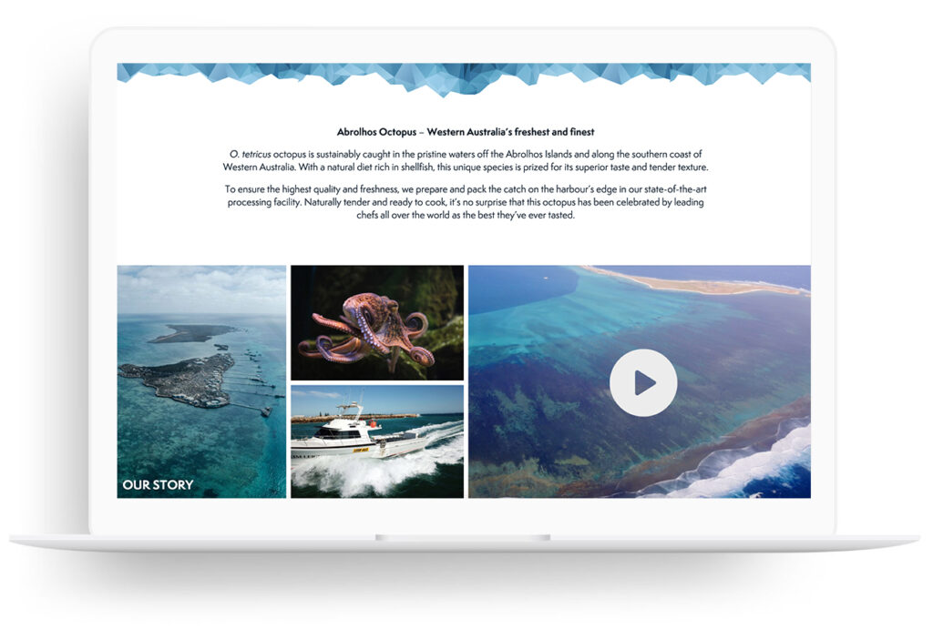 Abrolhos Octopus - Featured